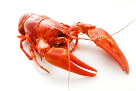crayfish: Fresh boiled cradwfish on white isolated background