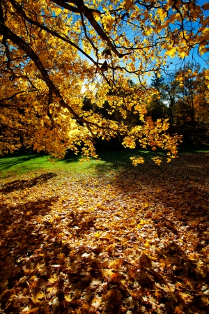 Colorful autumn trees on beautuful sunny day photo