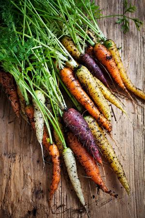Fresh rainbow carrots picked from the garden photo