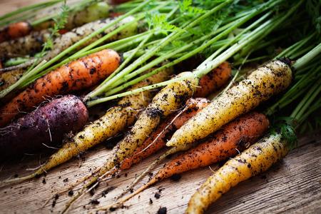 a carrot: Cà rốt tươi cầu vồng chọn từ các khu vườn