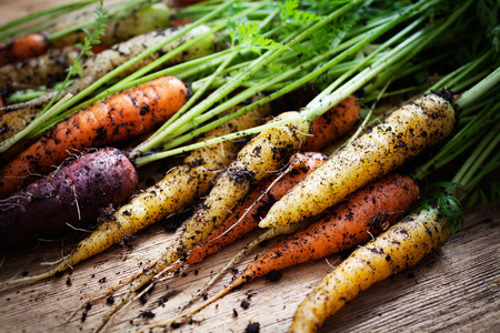 grow food: Fresh rainbow carrots picked from the garden Stock Photo