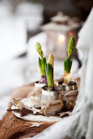 Three hyacinths inused cans Фото со стока