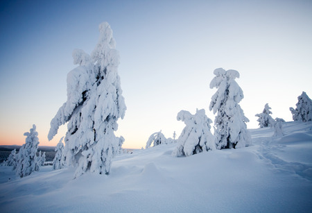 covered in snow: Cold winter in Lapland Finland