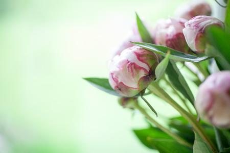 Close-up van mooie roze pioenen