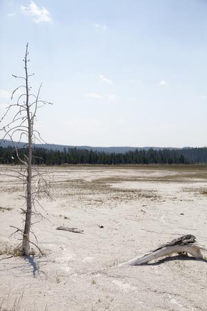 여름 옐로 스톤 국립 공원