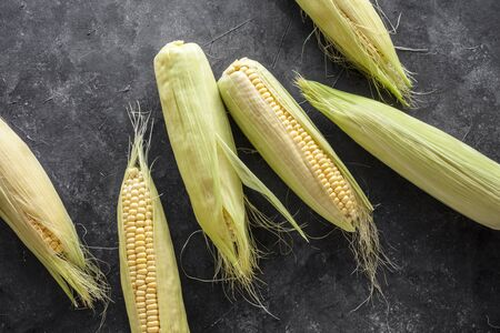 Freshly harvested corn cobs