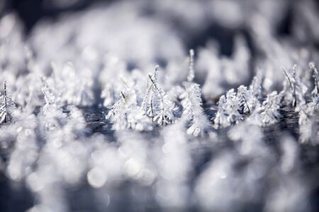 Frosty morning with beautiful details of frozen grass Stock fotó