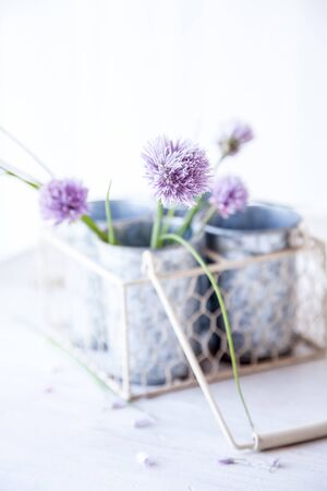 Fresh chive blossoms in a vase on table
