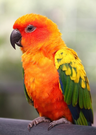 Lovebird holds a roost in a zoo Stock Photo