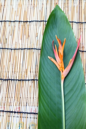 Heliconia flower and its leaf, put on the table cloth made from wooden Stock Photo