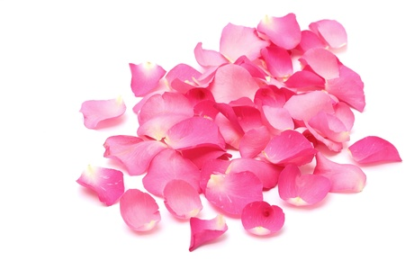 Closeup rose petals on white background photo