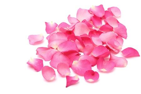 Gros plan des pétales de rose sur fond blanc