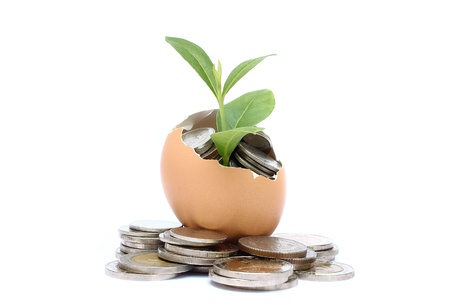 Money tree growing from the coins inside egg   Money financial concept  photo
