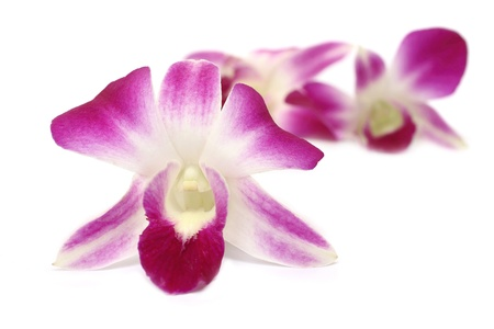 Close up pink orchid isolated on white background Stock Photo