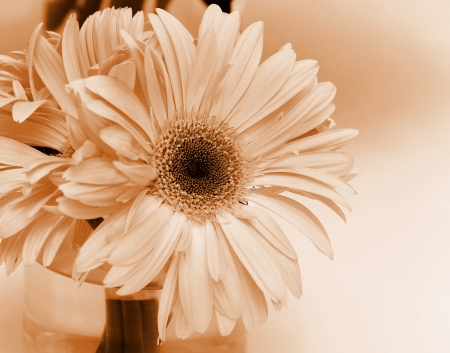 Close up gerbera flower in a vase