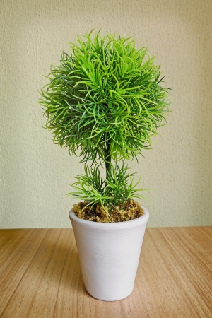 Small tree in a white pot Stock Photo