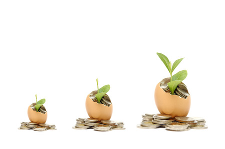 Money tree growing from the coins inside egg.  Money financial concept Stock Photo