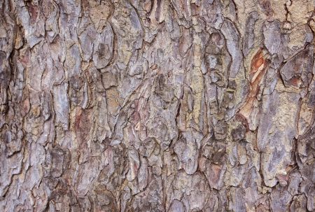 Bark of tree texture Stock Photo