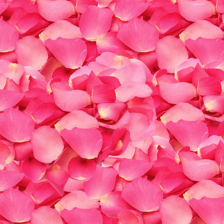 Pink rose petals texture and background
