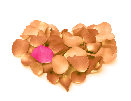 Rose petals in a form of heart shape on white background