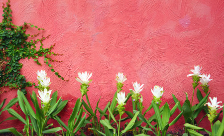 White flowers with red wall background Stock Photo