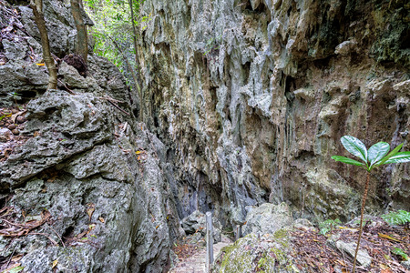 baratro: Scala in pietra calcarea voragine in Niue Archivio Fotografico