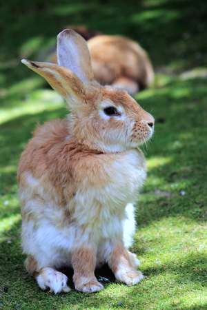 leporidae: Close Up of a Rabbit