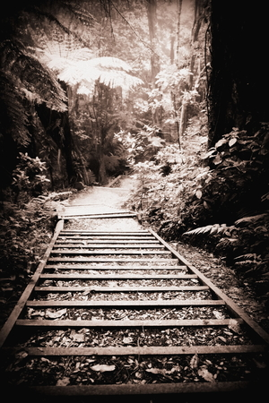 enchant: A flight of stairs along a forest path in the woods