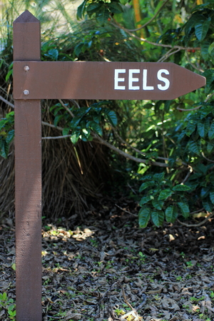belonging: A wooden sign pointing towards Eels; An eel is any fish belonging to the order Anguilliformes.