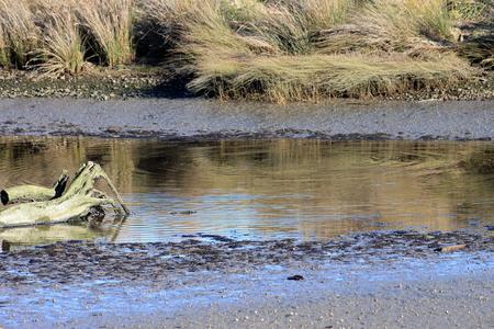 estuary: Mud flats at an estuary pond at low tide