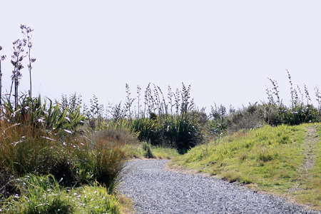 new zealand flax: New Zealand Coastal pathway Stock Photo