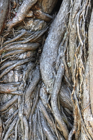gnarled: Abstract Image of a Gnarled Tree Trunk Stock Photo