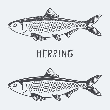 herring vector illustration Vettoriali