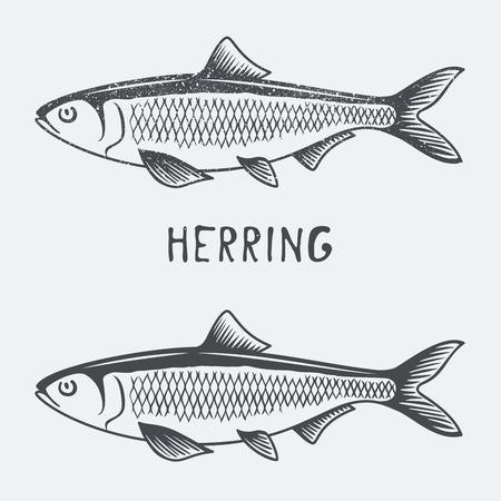 herring vector illustration Stock Illustratie