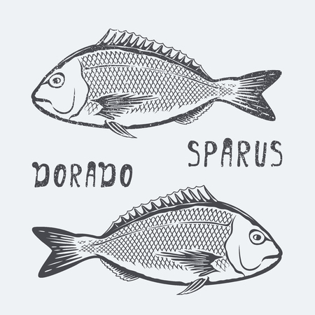 dorado: Dorado sparus illustration