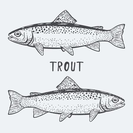 Trout fish illustration Vectores