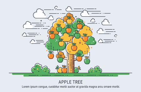 appletree: Apple tree. Season collecting apples. Thin lines vector illustration.