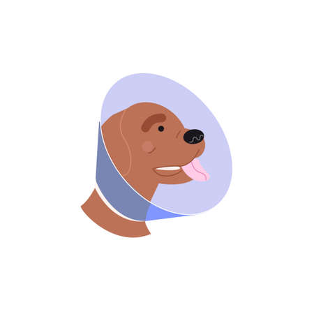 A dog in a dog collar. Treatment of Pets. Operation of dogs and animals. Veterinary clinic for dogs illustration