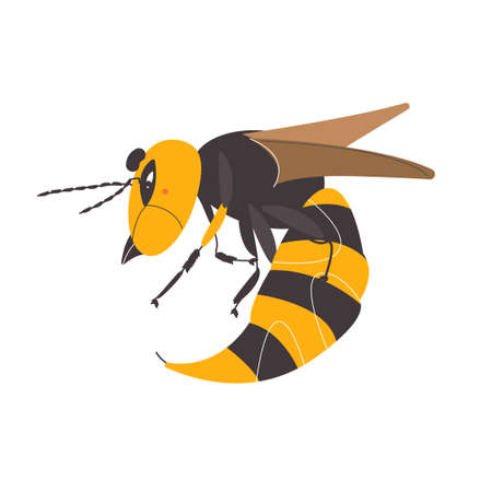 Hornet on a white background. Wasp illustration. Bee vector