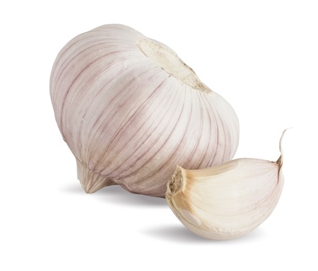 head of garlic isolated on white background Stock Photo - 16269398