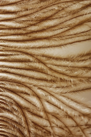 prerequisite:   gentle African ostrich feather macro Stock Photo
