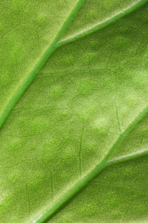 green leaf macro background texture photo