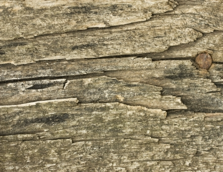 old board texture rough and burned wood Stock Photo - 16328317