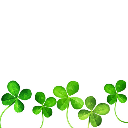 shamrock: Four Leaf Clover isolated on white