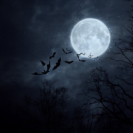 Bats flying in the night with a full moon in the background. photo