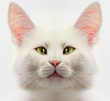 close up eyes: white cat with green eyes close up Stock Photo