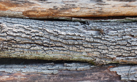 cortex: texture of the logs in the cortex, close-up Stock Photo