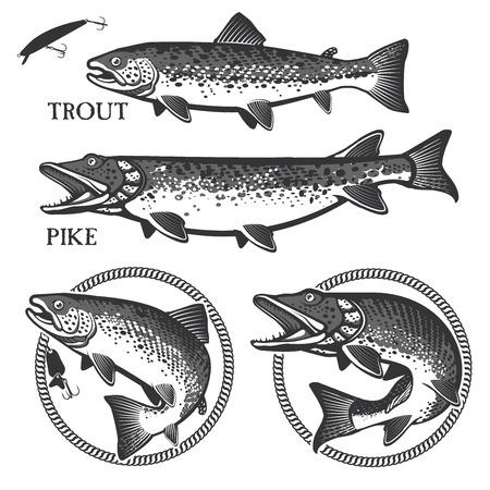 truchas: Conjunto de vector emblema de la pesca de truchas y lucios Vectores