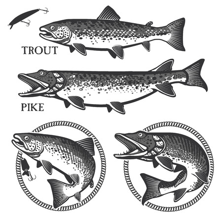 rainbow trout: Set of vector fishing emblem with trout and pike