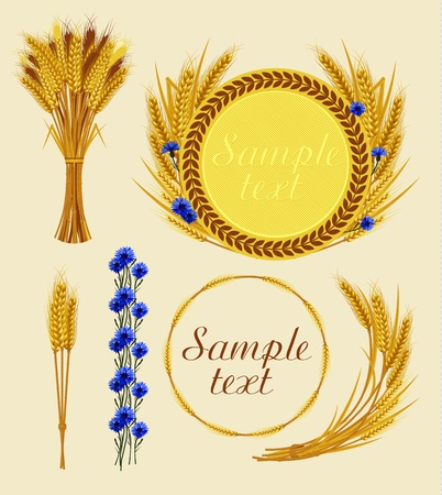 grains: Bunch of wheat, frame with wheat and cornflowers. Vector illustration.
